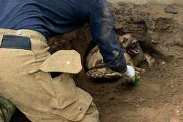 A dog named Taylor and a tortoise named Godzilla were rescued from a hole in Southern California. Click through the gallery for more animal stories.