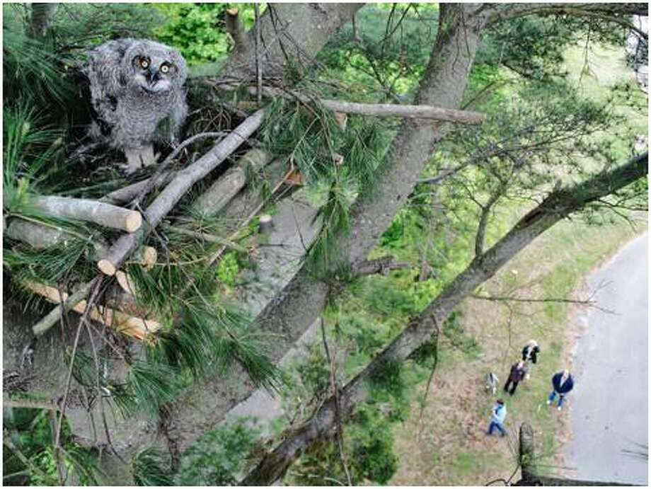 Todd Secki climbs high into the air to re-nest baby birds of prey that have fallen from trees. His work marks part of A Place Called Hope's efforts to rescue, rehabilitate and preserve local raptor species. Photo: Contributed Photo / A Place Called Hope