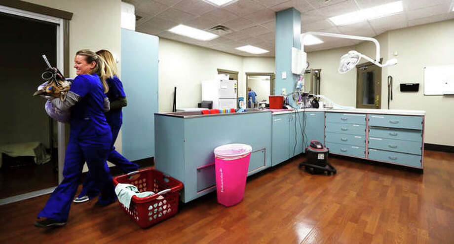Veterinarian assistants Janell Stoefen and Beth Hathorn carry a dog to the recovery area after a neutering procedure at the Milan Animal Welfare Clinic in Milan. Photo: Kevin E. Schmidt | Quad City Times (AP)