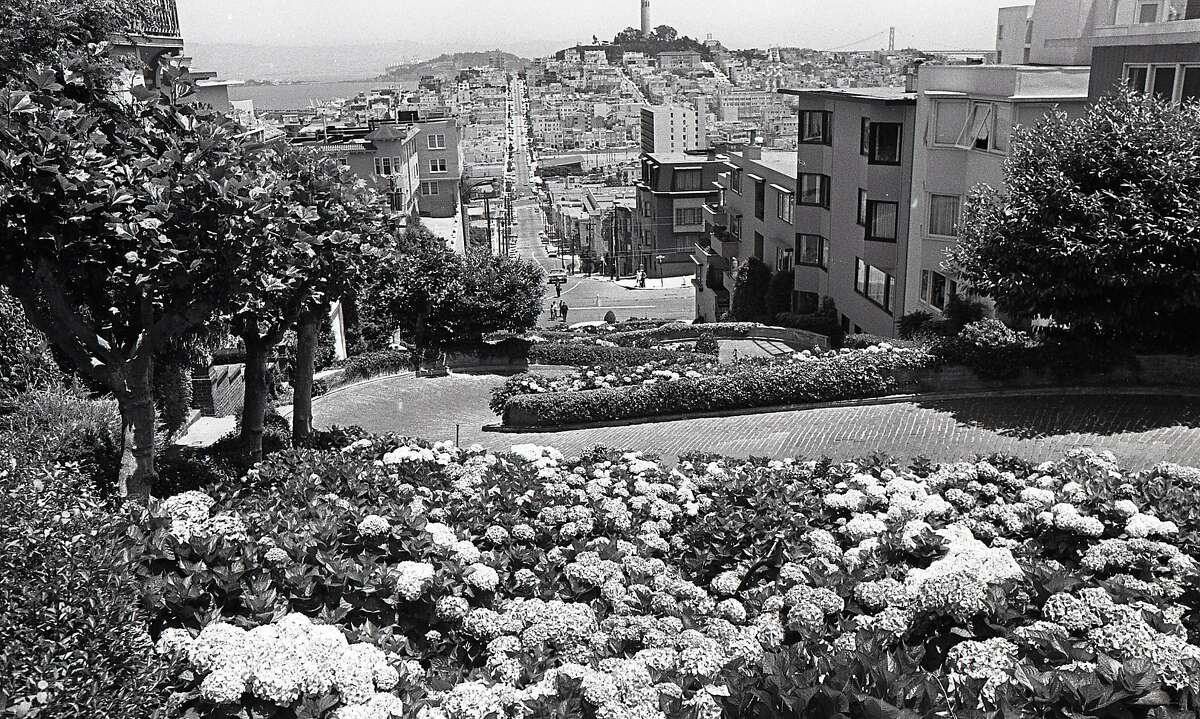 The crookedest street in the world is said to be Lombard Street, and for years, Peter Bercut planted and maintain hydrangeas long the road there was a memorial plaque placed in his memory June 28, 1972