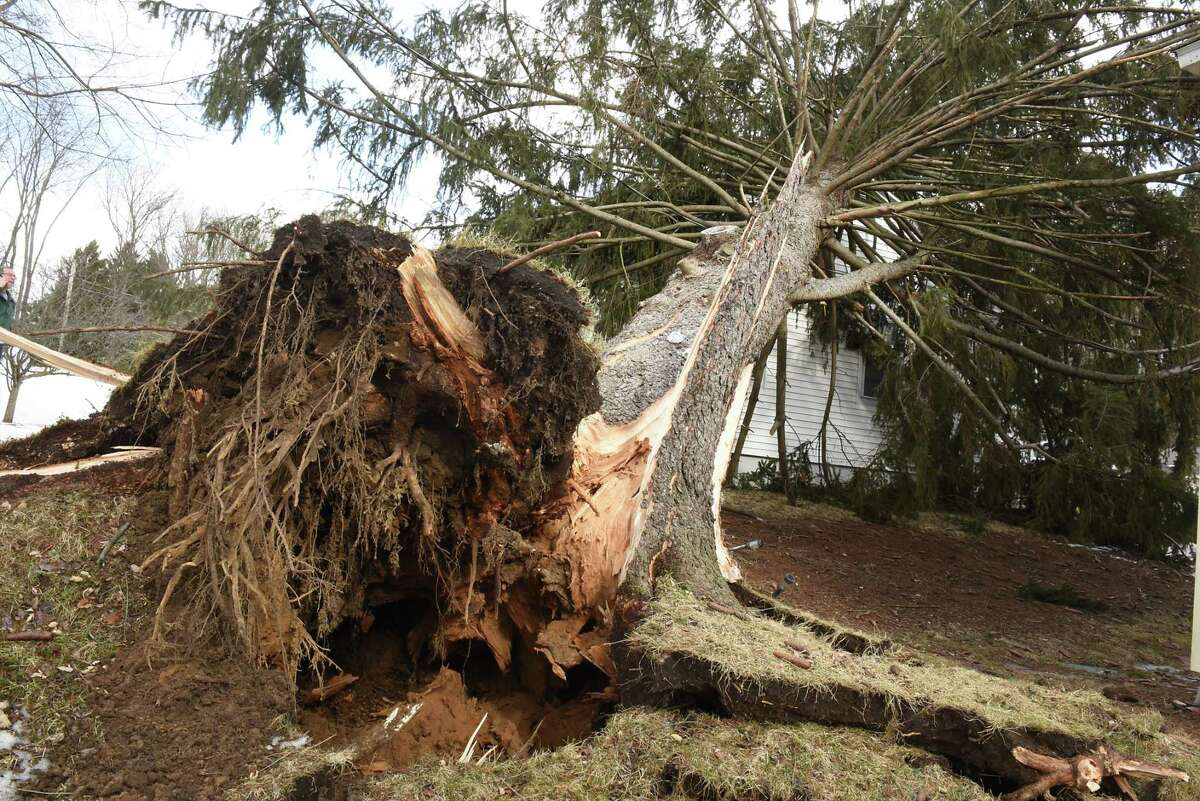 A huge pine tree fell on a house due to high winds on Monday, Feb. 25, 2019 in Guilderland, N.Y. (Lori Van Buren/Times Union)
