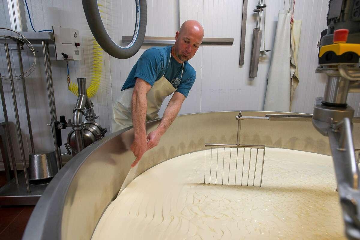 Beau Schoch cuts curds hardening into Monterey Jack cheese at Schoch Family Dairy in Salinas, Calif.