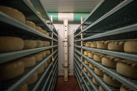 Wheels of Monterey Jack cheese age at Schoch Family Dairy in Salinas, Calif.