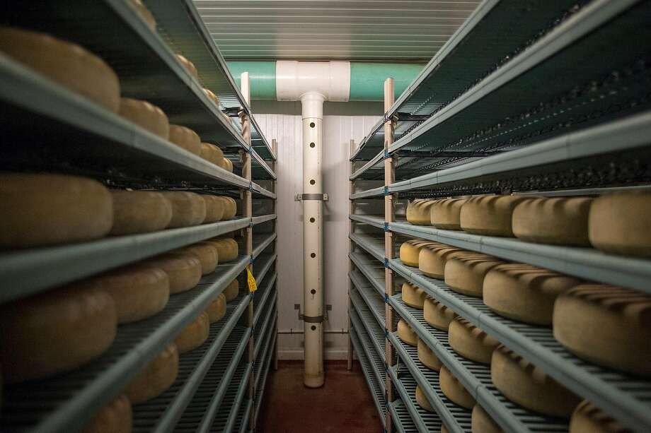 Wheels of Monterey Jack cheese age at Schoch Family Dairy in Salinas, Calif. Photo: Nic Coury / Special To The Chronicle
