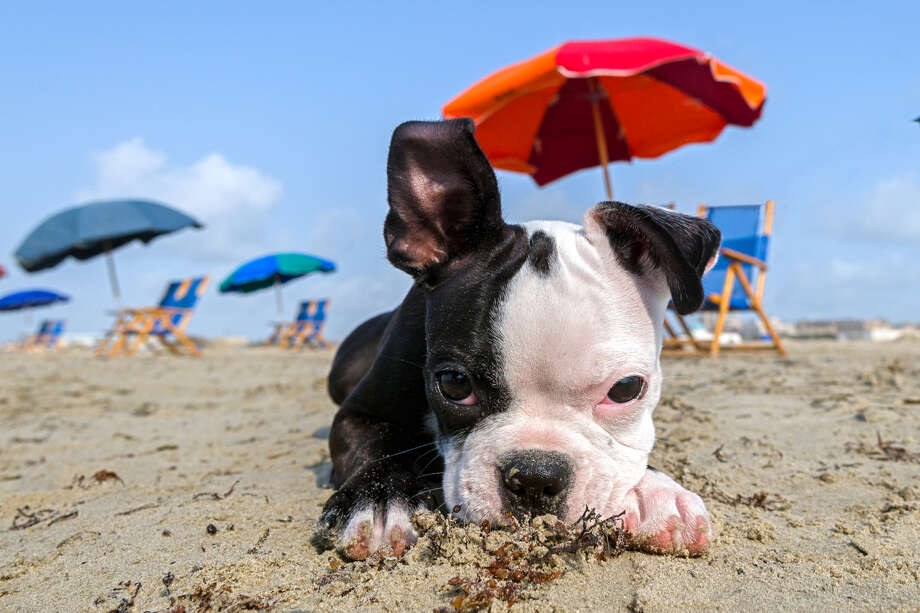 When it comes to planning a family vacation or weekend getaway, you also need to consider care options for your pets. Photo: Courtesy Galveston CVB