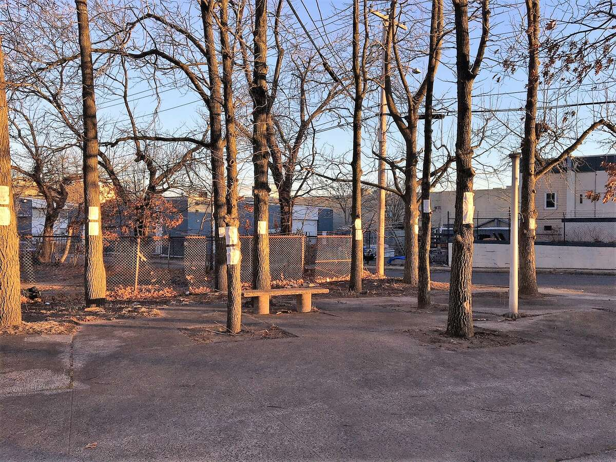 Mini-grove of trees to be removed at the corner of Union and Fair streets.