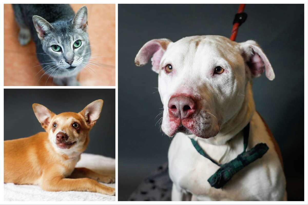 Animals ready to be adopted from BARC Houston Animal Shelter. Photographed Wednesday, Feb. 27, 2019, in Houston.