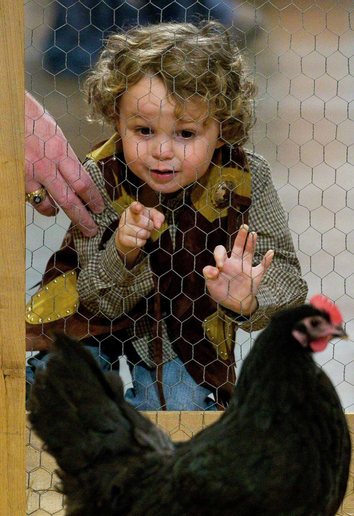 Henry Pichot, 3, checks out the chickens at the Houston Livestock Show and Rodeo, Wednesday, Feb. 27, 2019 in Houston.