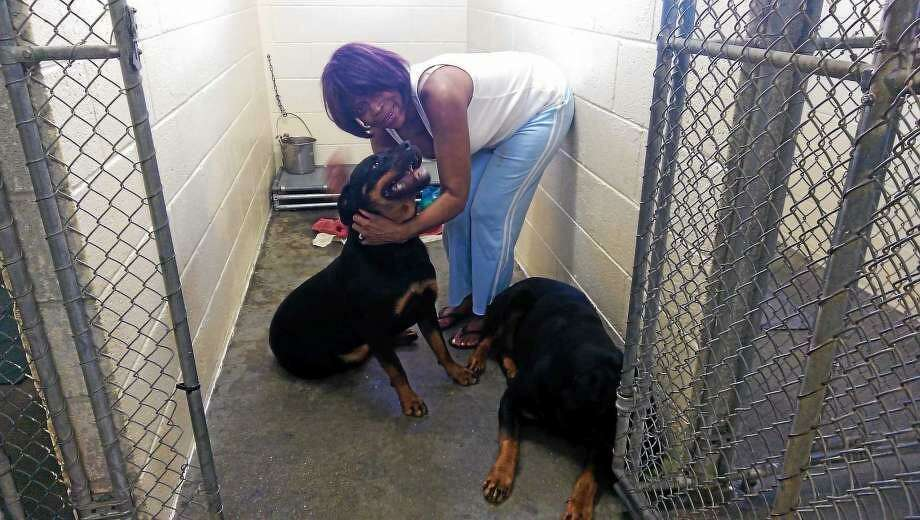 Hamden dogs on death row to go to sanctuary - New Haven Register
