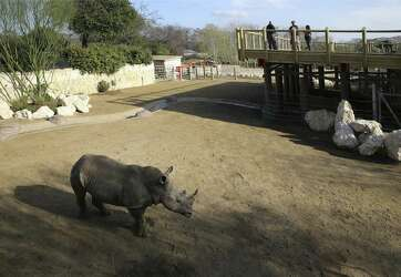 New Rhino Habitat At San Antonio Zoo