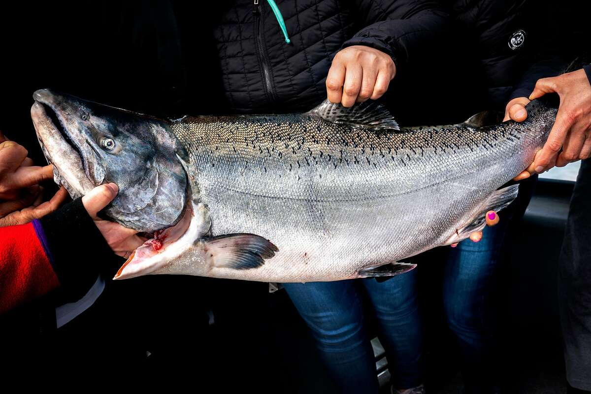 La Cocina members show their Chinook salmon catch on the Wacky Jacky fishing boat on Tuesday, Sept. 18, 2018, in the San Francisco Bay, Calif.