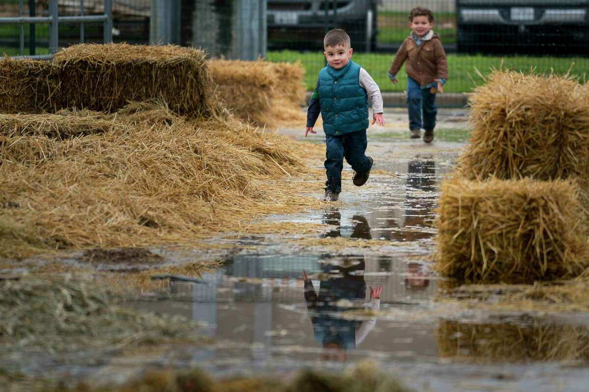 Cousins Emilio and Roland Sanchez run while their fathers feed the family's Santa Gertrudis cattle outside of the Houston Livestock Show and Rodeo on a rainy Thursday, Feb. 28, 2019. The family owns a cattle operation called RedDoc Farm in central New Mexico and are in town showing their Santa Gertrudis cattle.