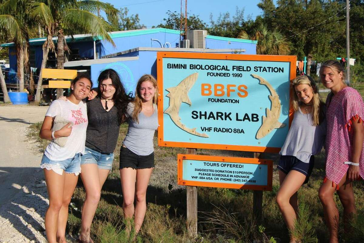 Sacred Heart Greenwich seniors Teaken Haggerty, Anna Snopkowski, Catherine Hamilton, Olivia Wise and Katie Miller traveled to Bimini, an island in the Bahamas, where they conducted research on a shark-repellant wetsuit they are developing. Stateside, they will review hours of footage of sharks and how they respond to the wetsuit to determine if their design worked, and if they can move forward with the patent process.