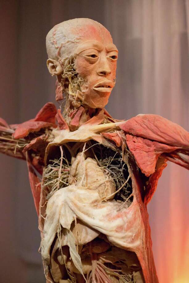 A cutaway closeup of organs and muscles in one body. Photo: Courtesy Of CT Science Center / Stardust Fallout