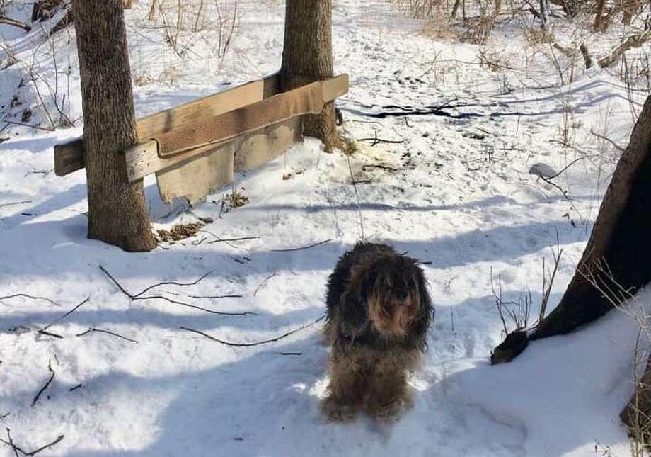 Suffield police are looking for the person who tied a dog to a tree in a local park overnight in a snowstorm. The dog was found tied to a tree off a trail in Stony Brook Park Thursday, Feb. 28, 2019 police said in a Facebook post. Anyone with information is asked to call Animal Control Officer Ryan Selig at 860-668-3870 or email RSelig@suffieldct.gov. Photo: Suffield Police