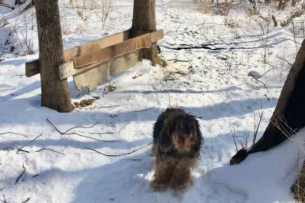Suffield police are looking for the person who tied a dog to a tree in a local park overnight in a snowstorm. The dog was found tied to a tree off a trail in Stony Brook Park Thursday, Feb. 28, 2019 police said in a Facebook post. Anyone with information is asked to call Animal Control Officer Ryan Selig at 860-668-3870 or email RSelig@suffieldct.gov.