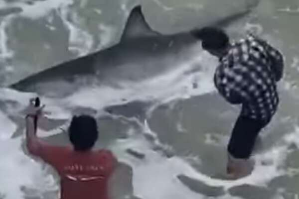 A man fishing off Navarre Beach Pier in Florida reeled in a 10-foot-long, 700-pound great white shark. See footage of the catch on YouTube.