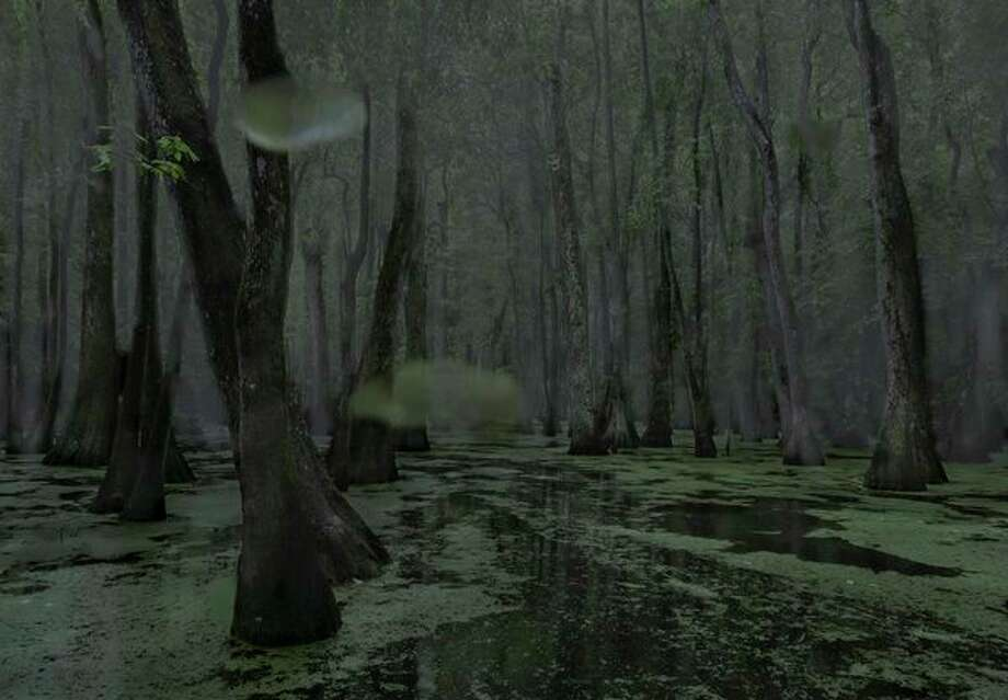 Jeanine Michna-Bales shot this photo, 'Cypress Swamp' in 2014 in Middle, Mississippi. It is among four images on display in the exhibit, 'Southbound:Photographs of and about the new South.' / Jeanine Michna-Bales; JMBales Photography, LLC
