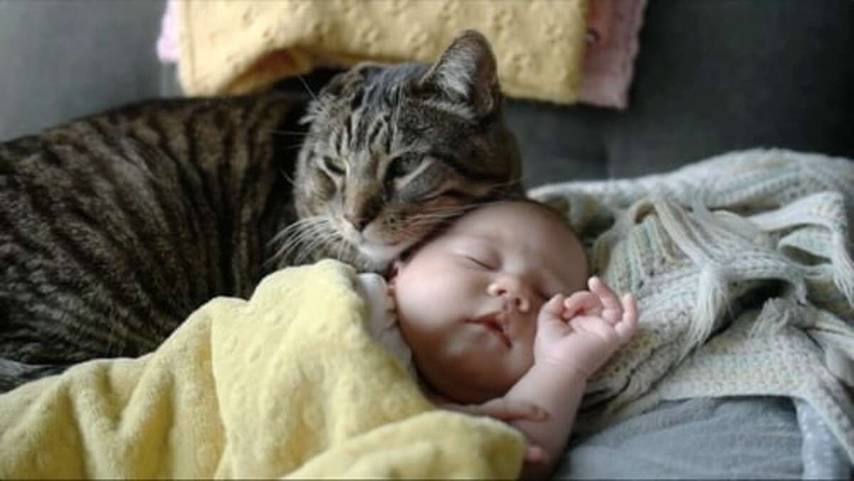 A cat and infant in a video at CatVideoFest
