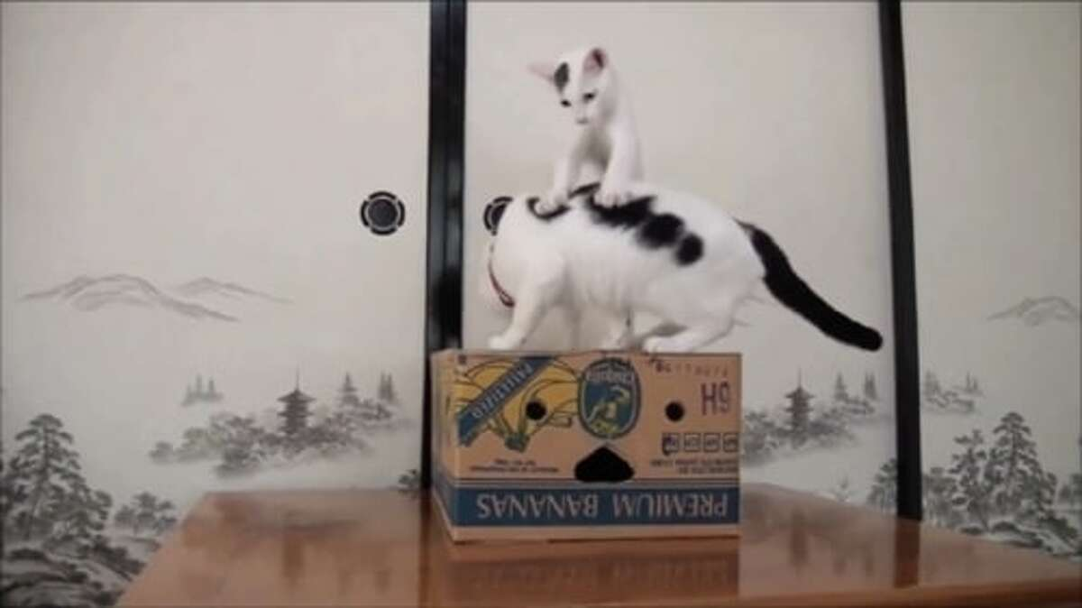 Nothing is more fun than cats with a box as this video at CatVideoFest shows.