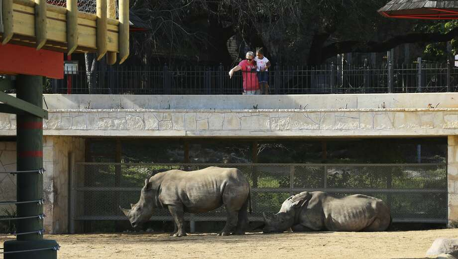 FILE — A zoo patron and a child look at Nyota (left) and Ophelia, two new Southern White rhinos at the San Antonio Zoo on Wednesday, Feb. 27, 2019. The arrival of the rhinos signals the opening of the enlarged Savana Habitat, which includes landscaping, trees, a waterfall and several additional species. Photo: Kin Man Hui/San Antonio Express-News