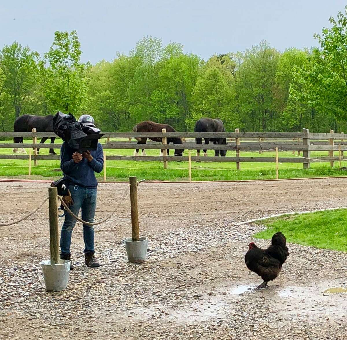 Cameraman and chicken during shooting at June Farms for