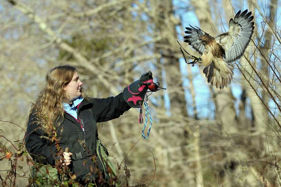Christine Peyreigne, head of the Christine's Critters nonprofit, poses with Theron, a bird that she hunts with. Photo: Contributed