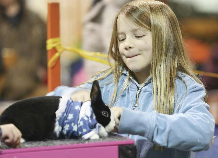 Ellie Evans, 10, dresses her rabbit, Poison Ivy, into its costume before the Rabbit/Cavy Costume Contest at the Houston Livestock and Rodeo Show on Monday, March 4, 2019. Photo: Elizabeth Conley, Houston Chronicle / Staff Photographer / © 2018 Houston Chronicle