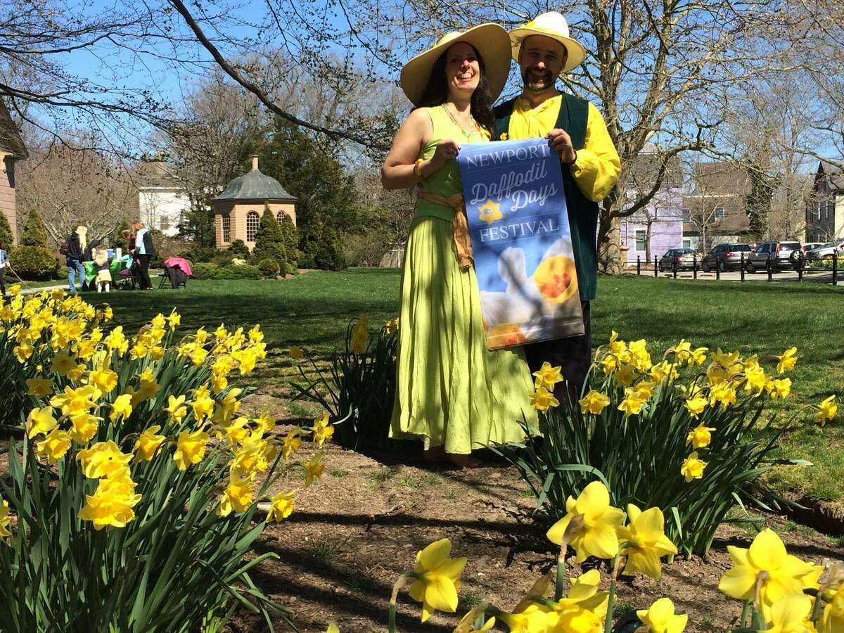 Daffodil Days are returning to Newport, R.I.