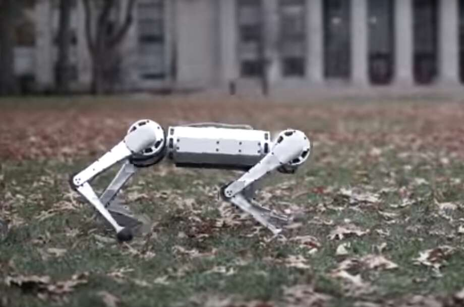 MIT researchers have unveiled a springy, 20-pound robot, that can do a backflip and is also capable of walking either right-side up or upside down.  The 12 jobs most at risk of being replaced by robots >>> Photo: MIT