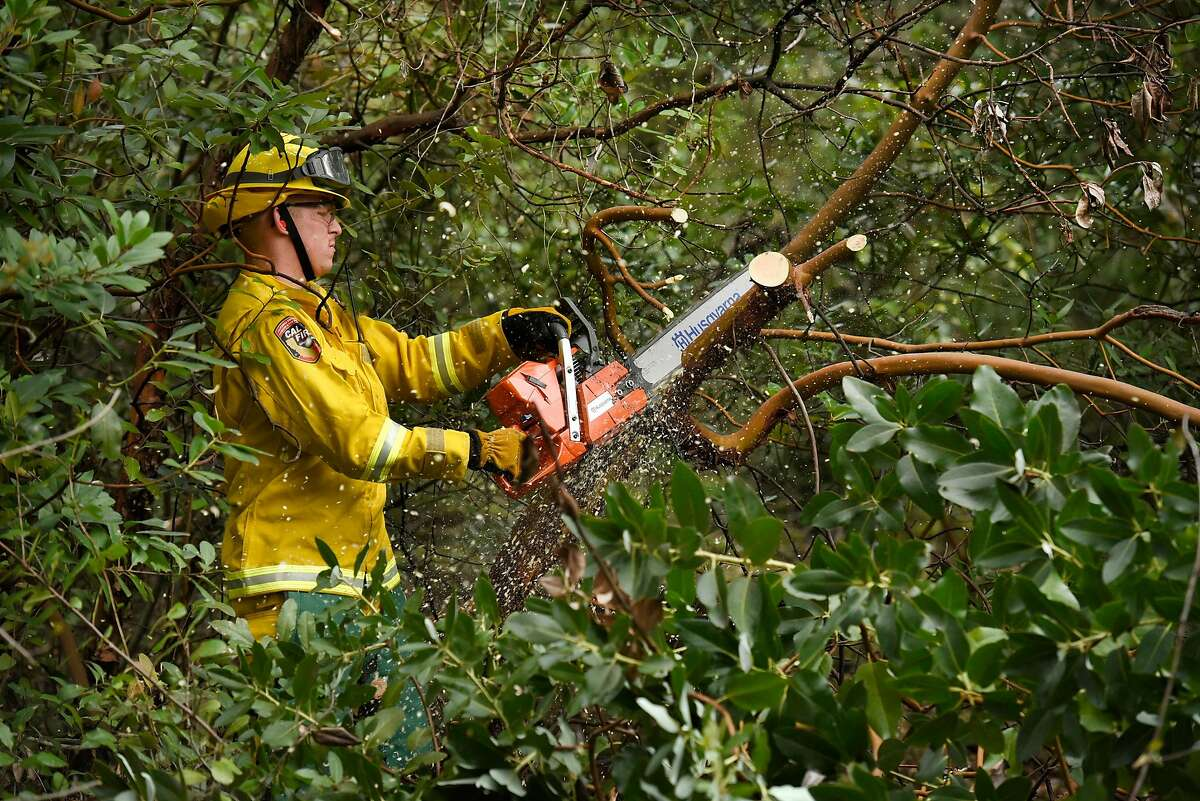 Cal Fire fuel reduction crew member Kyle Lekemby uses a chainsaw as he works clearing brush on Vallejo Water District land in Fairfield, Calif., on Monday February 25, 2019.