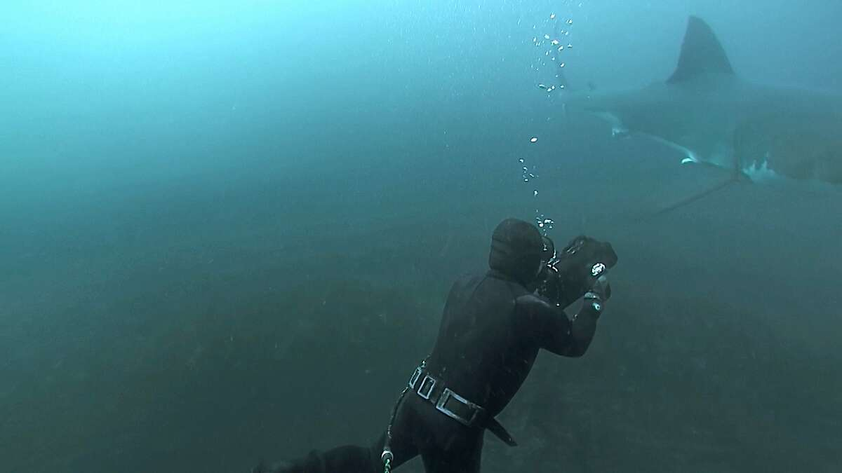 For more than a decade, Ron Elliott, a retired commercial sea urchin diver has been diving off the back of his boat, alone, 30 miles off the coast of San Francisco in a known feeding ground for white sharks - no cage, no protection besides his neoprene wetsuit.