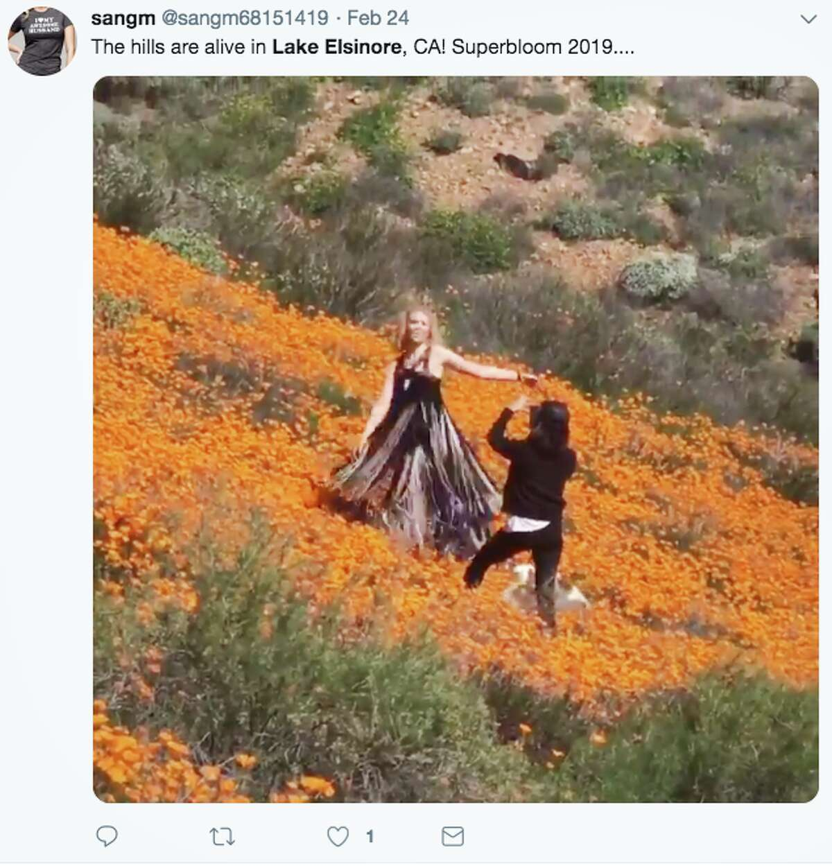 Social media users are sharing images of the poppy display in Lake Elsinore, Calif.