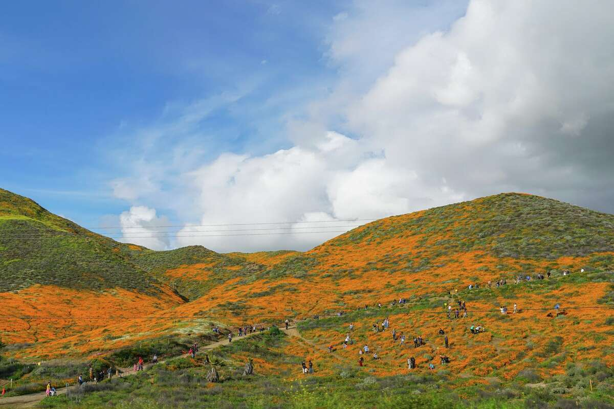 People descend on the hillsides around Lake Elsinore, Calif., to see an extraordinary poppy bloom in March 2019.