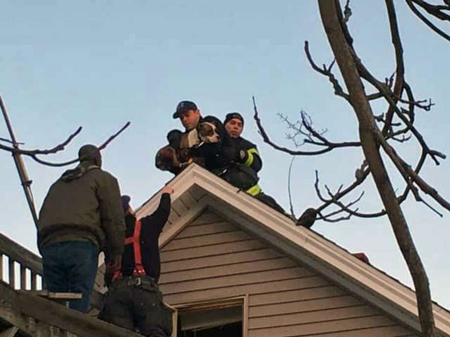 Norwalk, Conn., firefighters rescued a dog from a rooftop on March 5, 2019. Photo: Contributed Photo / Norwalk Fire Department / Contributed Photo / Connecticut Post Contributed