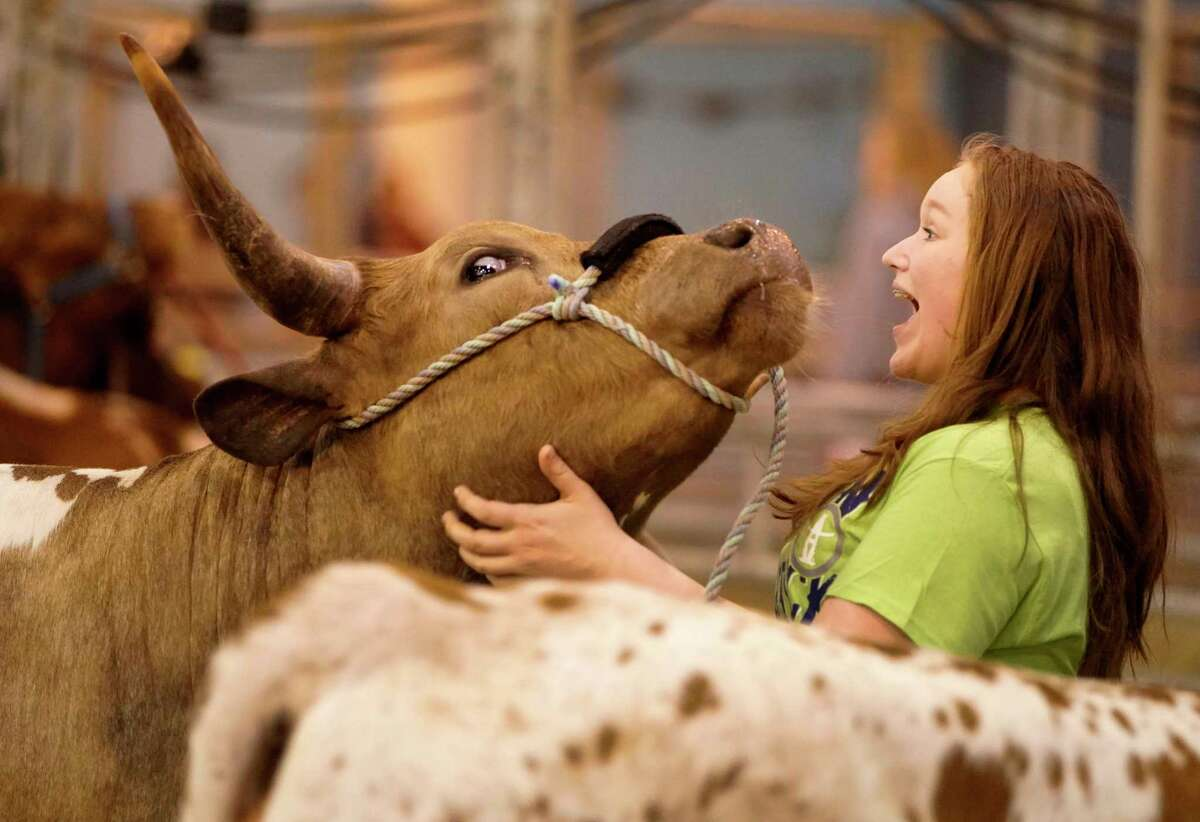 Sarah Heimeyer, 14, of Lake Jackson pets and talks to her longhorn heifer named Minnie Pearl at the NRG Center during the Houston Livestock Show & Rodeo Tuesday, March 5, 2019, in Houston.