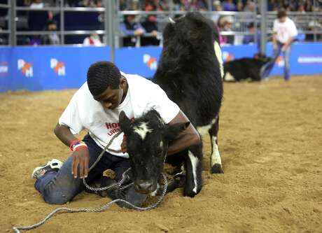 Keyshawn Rollison puts a halter on a calf during the calf scramble at the Houston Livestock Show and Rodeo Tuesday, March 5, 2019, in Houston.
