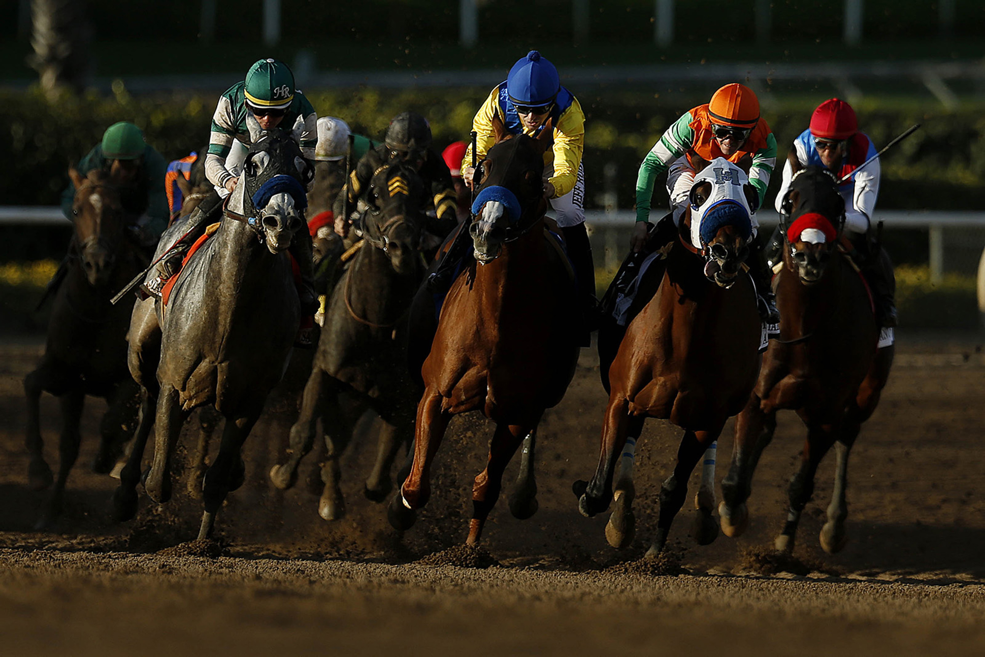 Santa Anita Cancels Racing After 21 Horse Deaths Houston