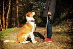 If you want a calm, well-behaved dog keep training him throughout his whole life.