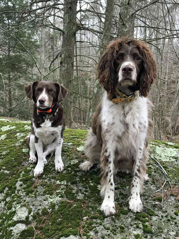 Enjoying an outing at The Preserve, with their owner Dr. Kristin Williams, from left are Jami, an 8-year-old female mixed breed, and Freedo, a 7-year-old male springer spaniel. Freedo became ill after contact with a deer carcass at The Preserve. Photo: Contributed Photo