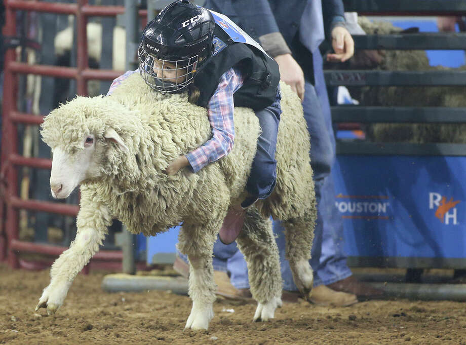 4e60fd4a93 A fistful of wool  Mutton busters hang on for dear life to earn rodeo  cowboy cred