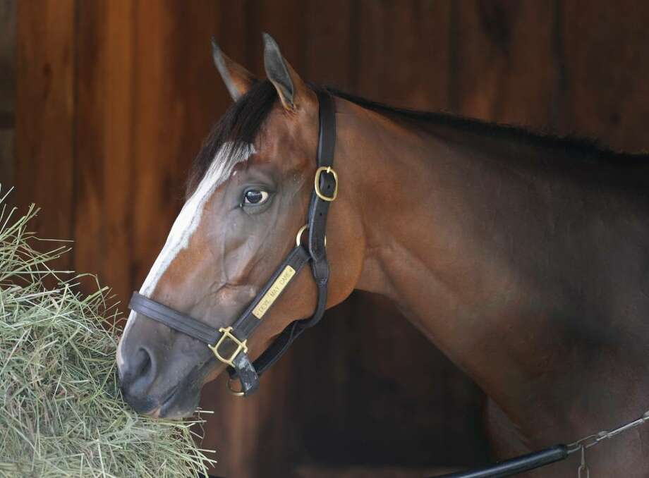 Devil May Care rest comfortably in Todd Pletcher's barn at the Saratoga Race Course. (Skip Dickstein/Times Union) Photo: Skip Dickstein / 2008