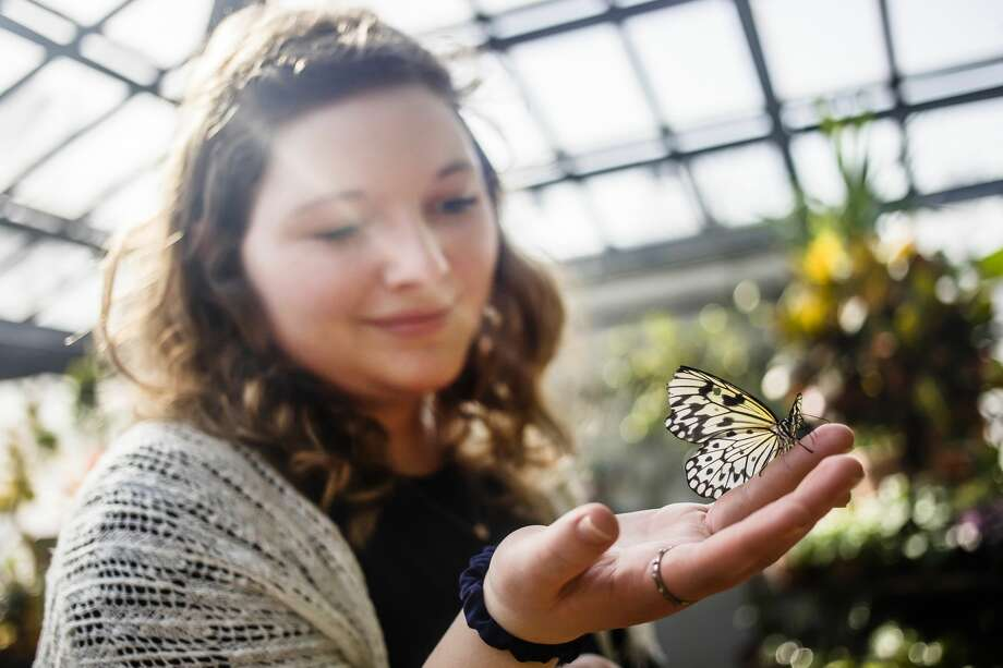 Ellie Molitor of Midland, 19, holds a butterfly on her hand inside the butterfly house at Dow Gardens on Thursday, March 7, 2019 in Midland. (Katy Kildee/kkildee@mdn.net) Photo: (Katy Kildee/kkildee@mdn.net)
