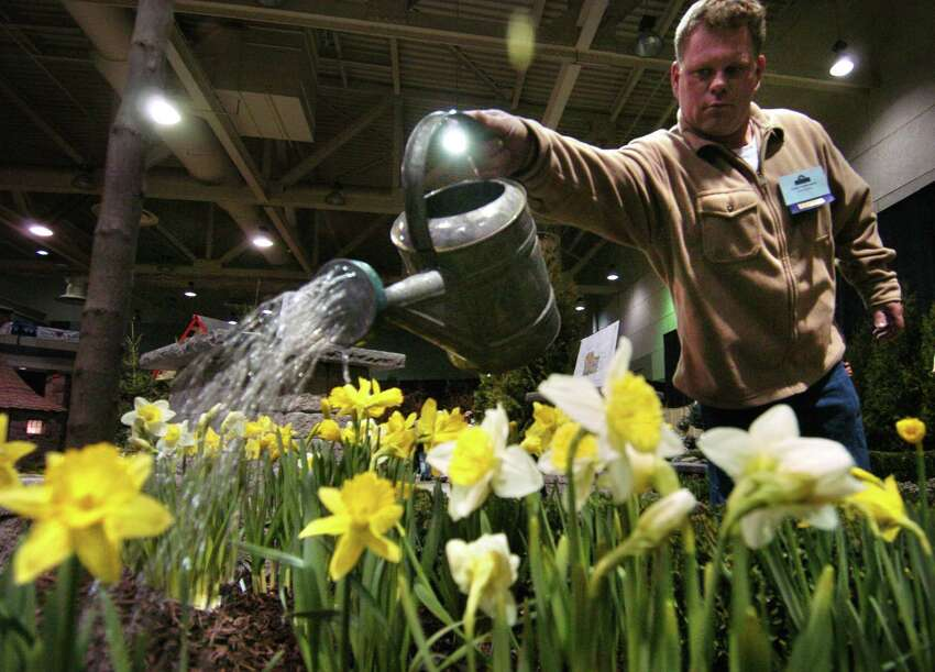 TIMES UNION STAFF PHOTO WILL WALDRON David Orsini, owner of Orsini Landscaping in Schenectady, waters his daffodil display, featured in the 18th Annual Capital District Flower and Garden Show, at Hudson Valley Community College in Troy, Friday March 18, 2005.