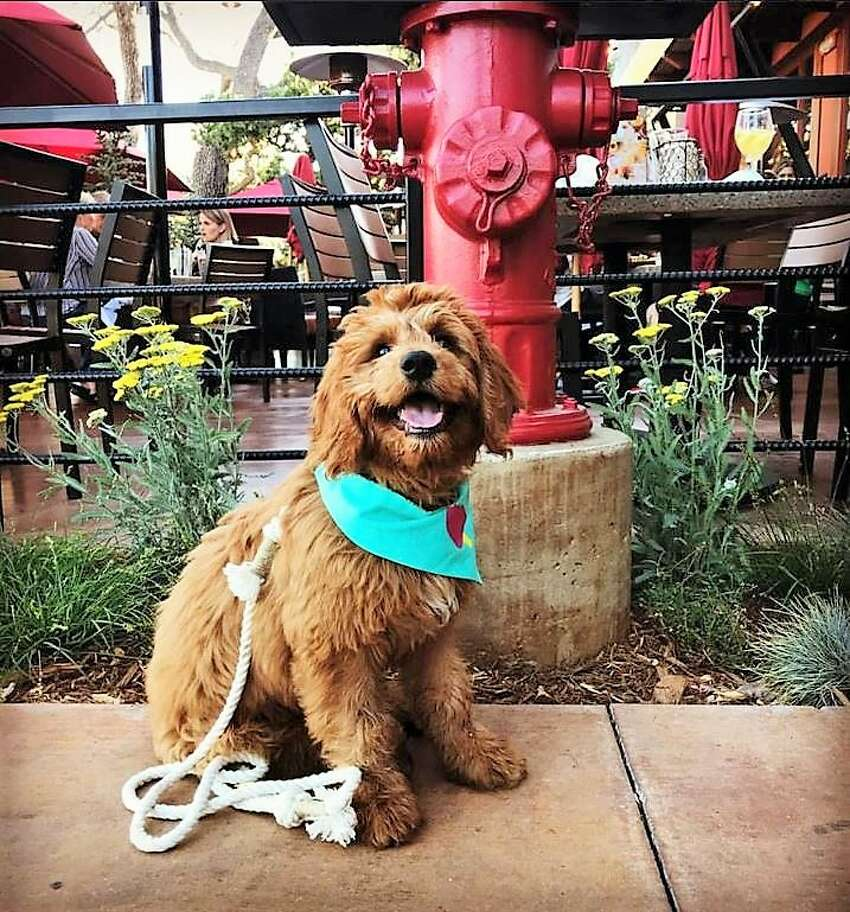 Fido is welcome on the patio.