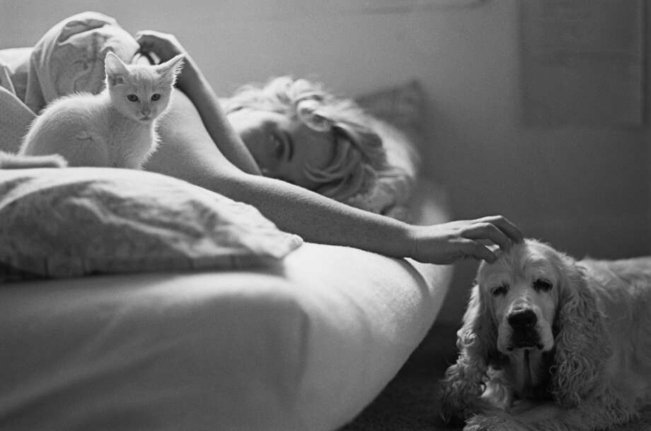A man wishes he had a little privacy with his wife apart from her cats and dogs. Photo: Getty Images