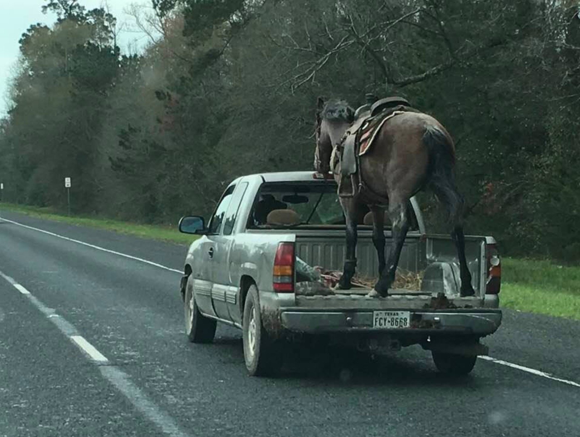 Driver Who Hauled Horse In Bed Of Pick Up Truck Could Face