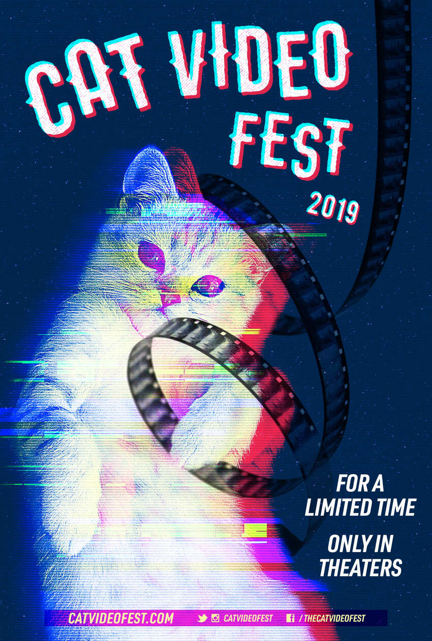 CatVideoFest, a compilation of dozens of cat videos, was shown at Spectrum 8 Theatres in Albany on Monday, March 12.