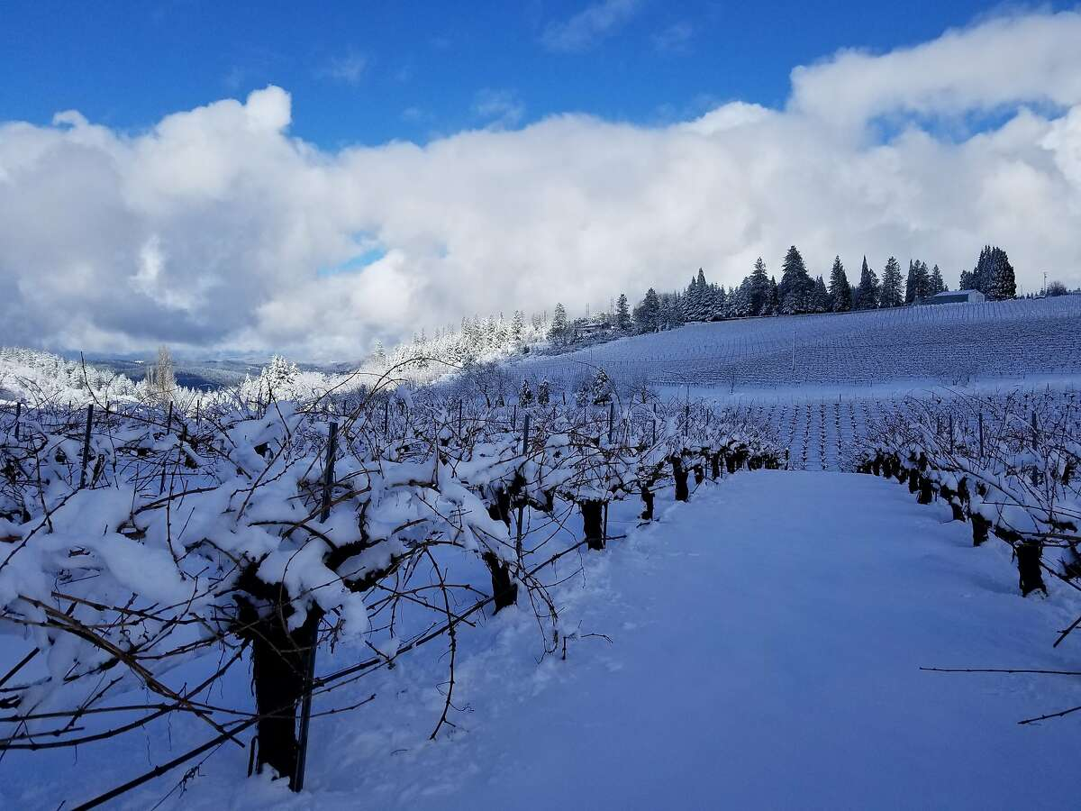 Lava Cap Winery in El Dorado County has had an exceptionally snowy winter this year. These photos were taken in February 2019.
