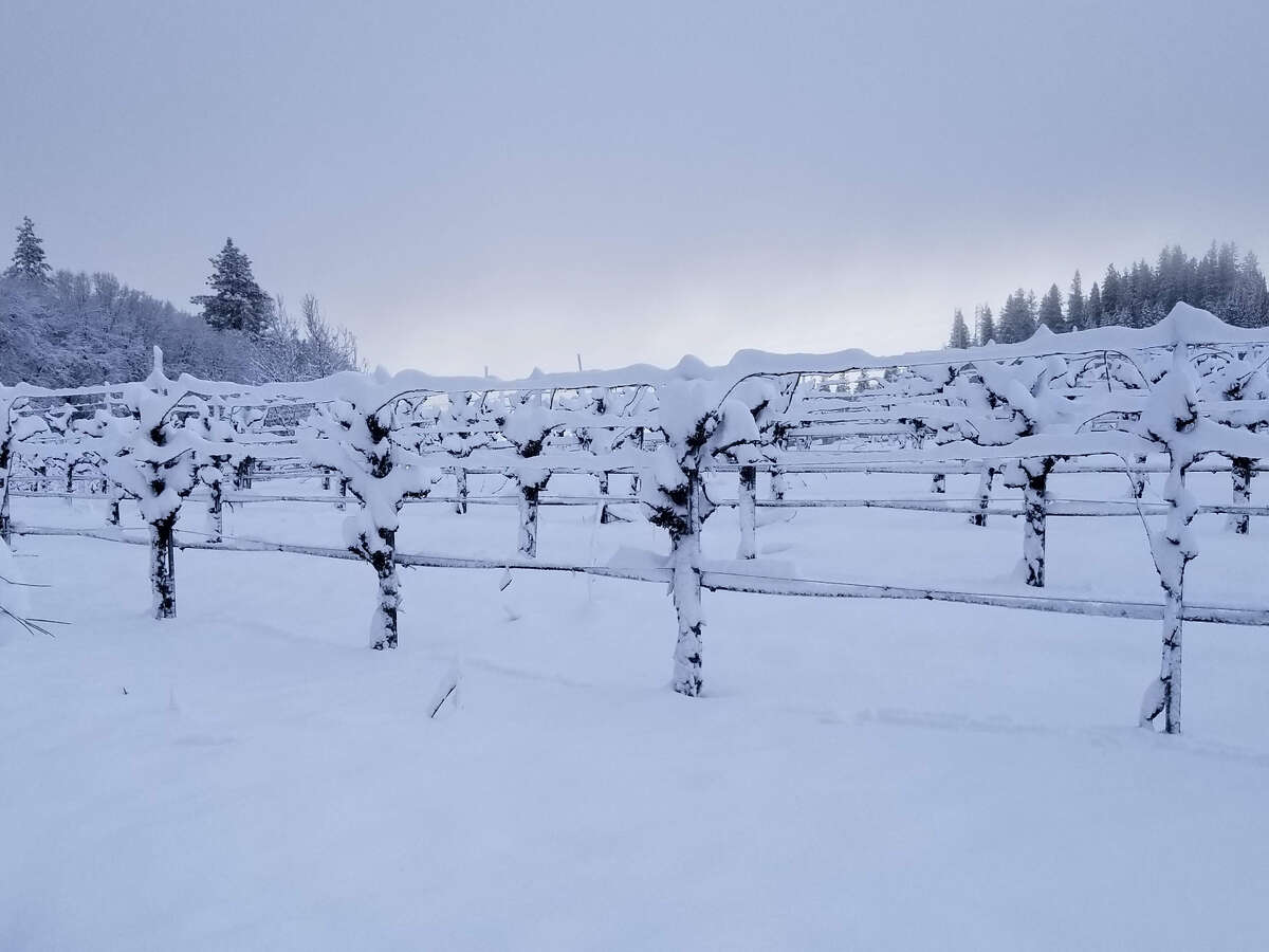 Lava Cap Winery in El Dorado County has had an exceptionally snowy winter this year, as seen in this photo taken in February.